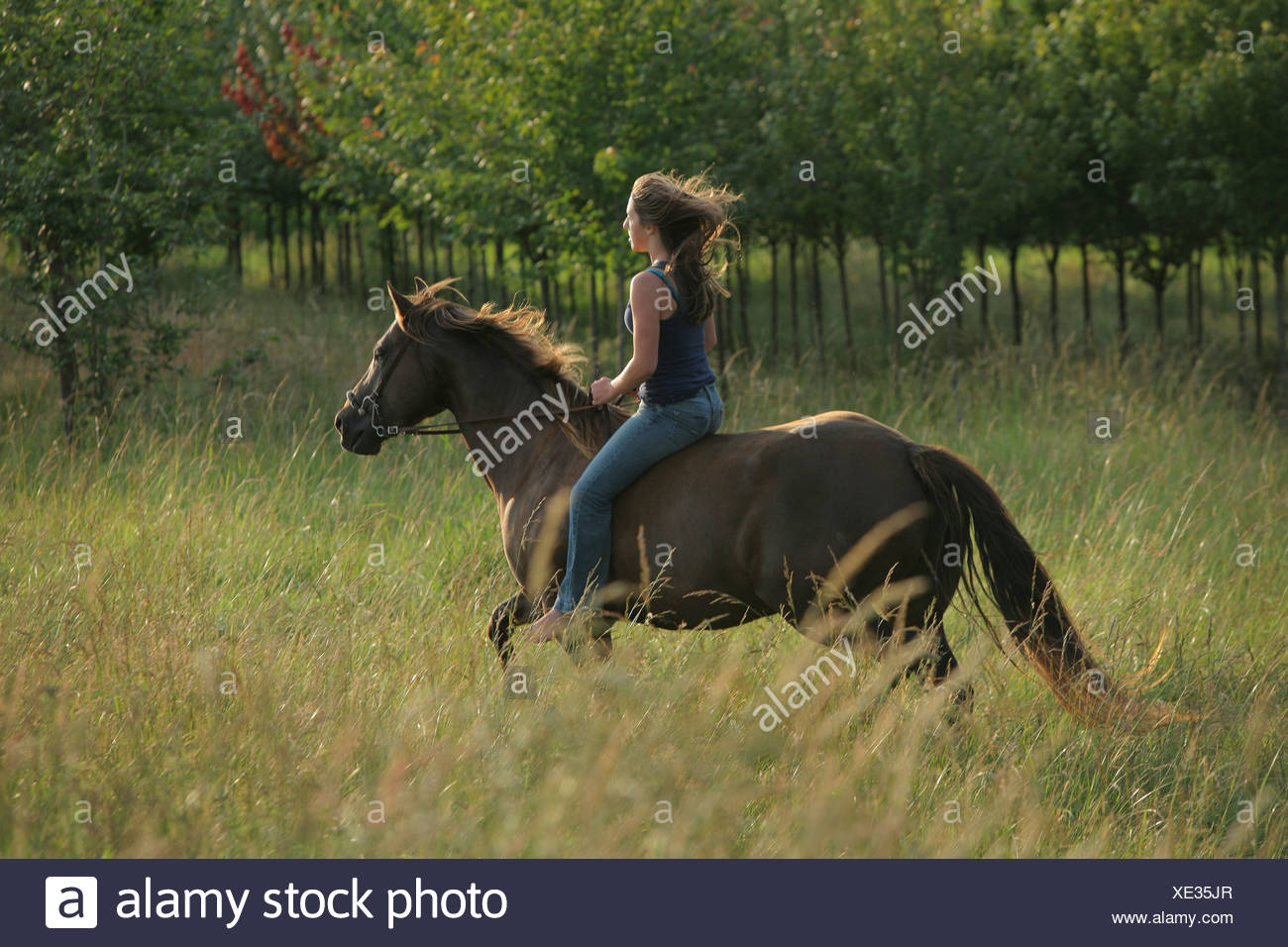 A Teenage Girl Riding A Horse Through A Field; Troutdale Oregon United States Of America - Stock Image