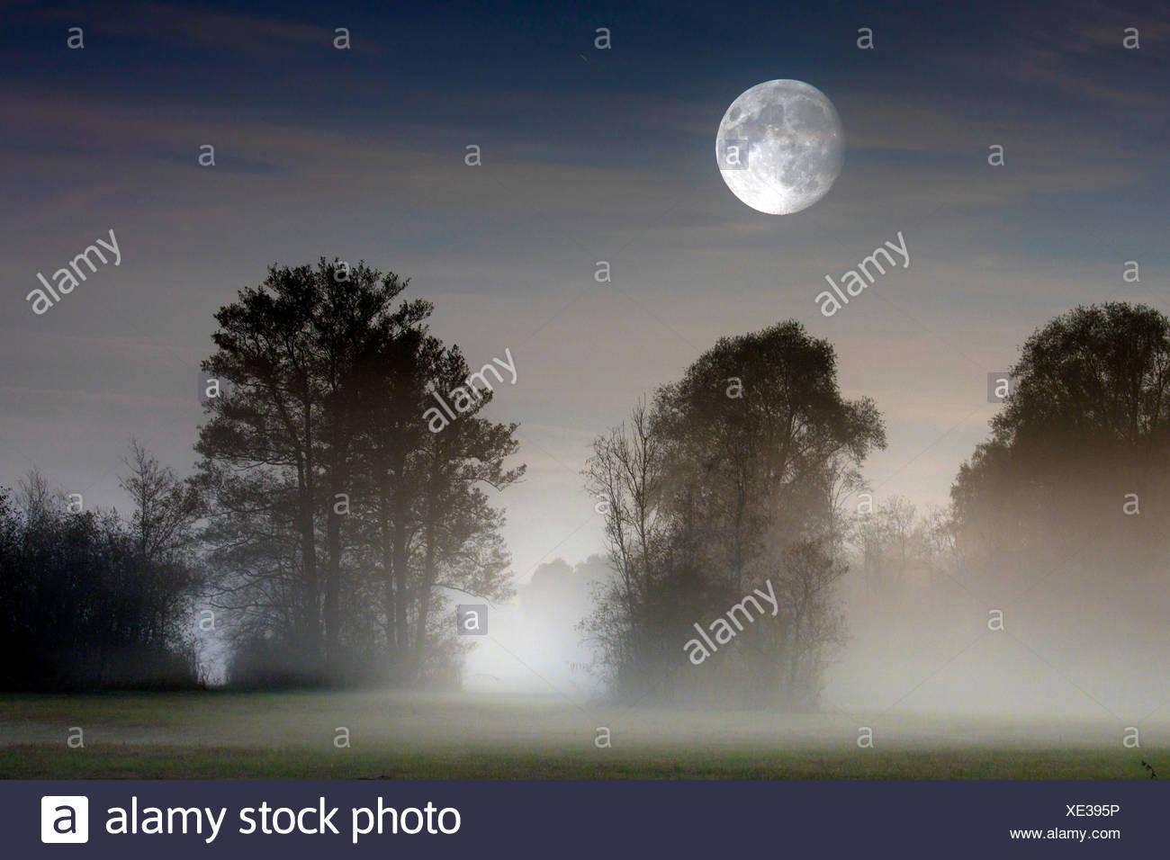 Vollmond ueber im Moor aufsteigendem Bodennebel, Deutschland, Bayern, Grabenstaetter Moor | full moon over ascending mist on moo Stock Photo