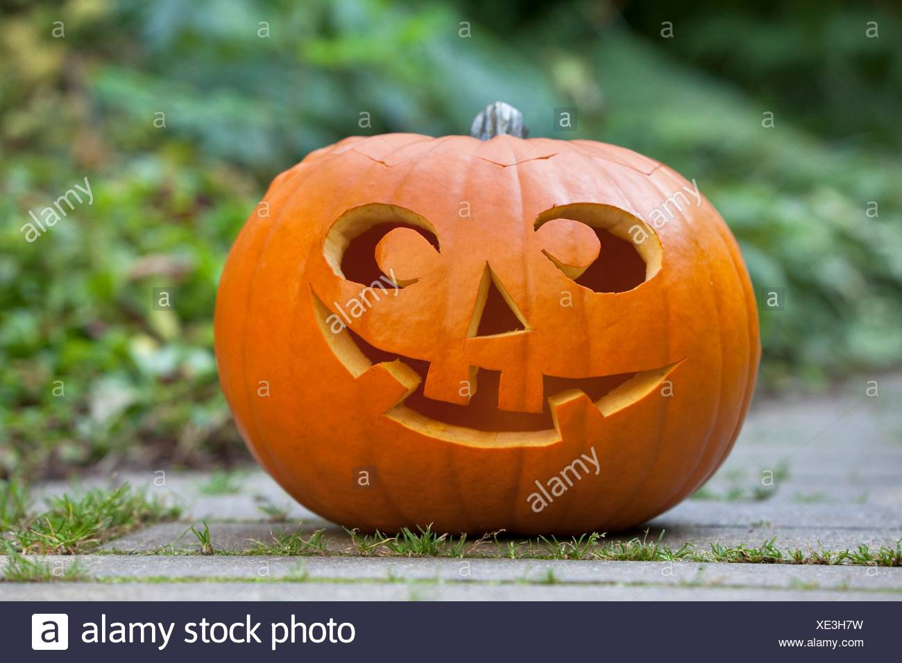 Halloween Pumkin In The Garden Stock Photo Alamy | meaning, pronunciation, translations and examples. https www alamy com halloween pumkin in the garden image284050477 html