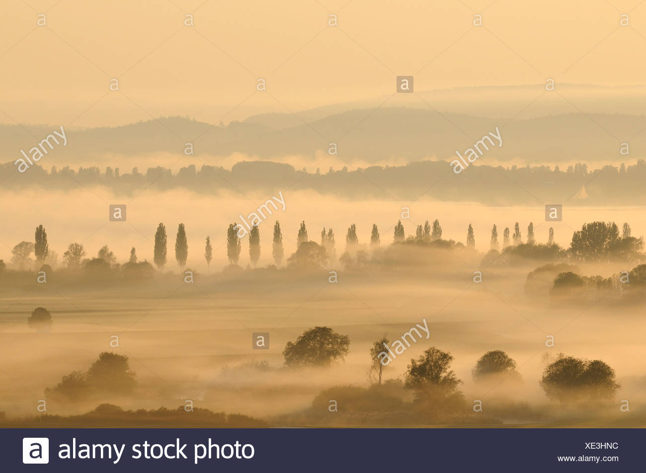 Morning mist in Radolfzeller Aachried, county of Constance, Baden-Wuerttemberg, Germany, Europe - Stock Image