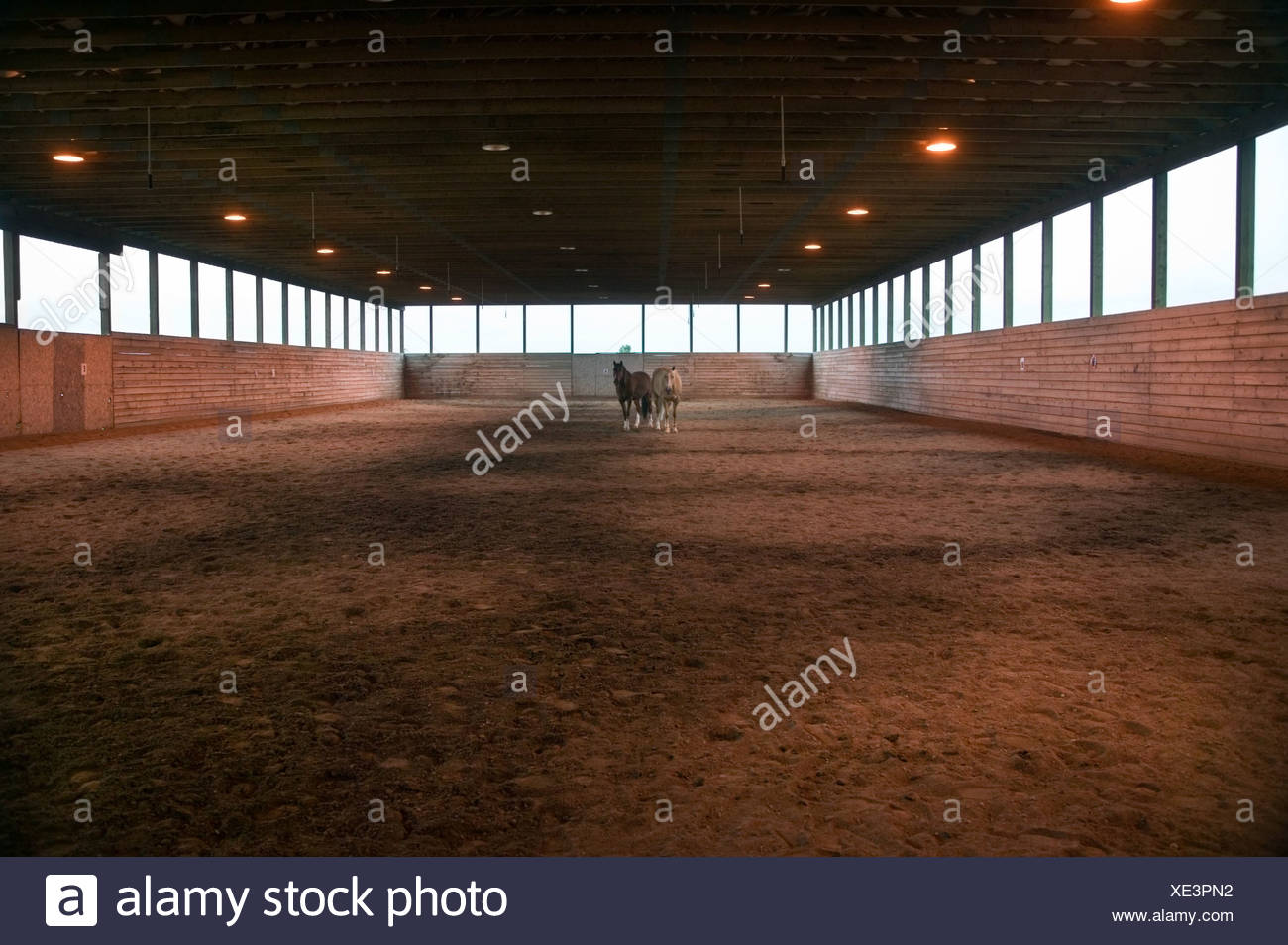 Horses in arena - Stock Image