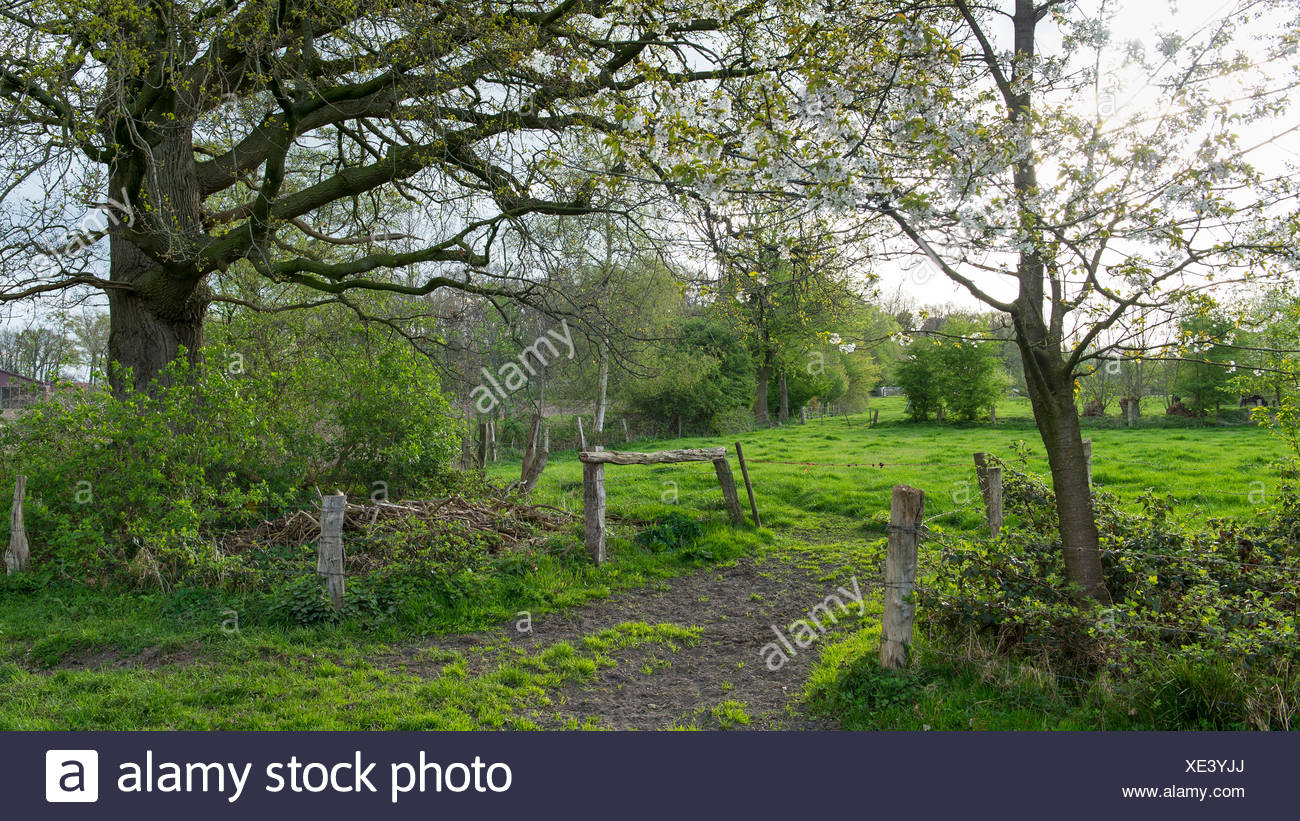 green pasture, landkreis vechta, oldenburg münsterland, lower saxony, germany - Stock Image