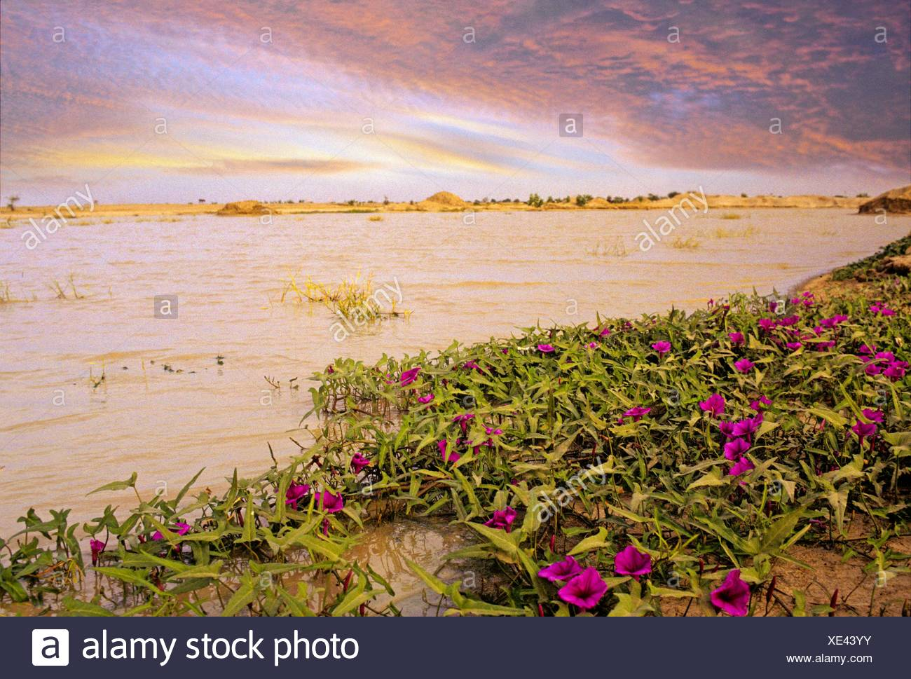 lake, Chad, Central Africa. - Stock Image