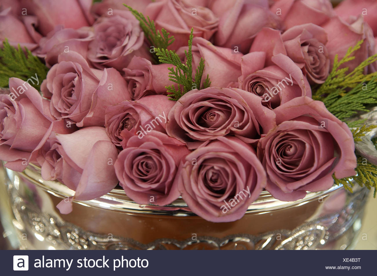 Silver Vase With Dusky Pink Roses And Cypress Leaves Stock Photo