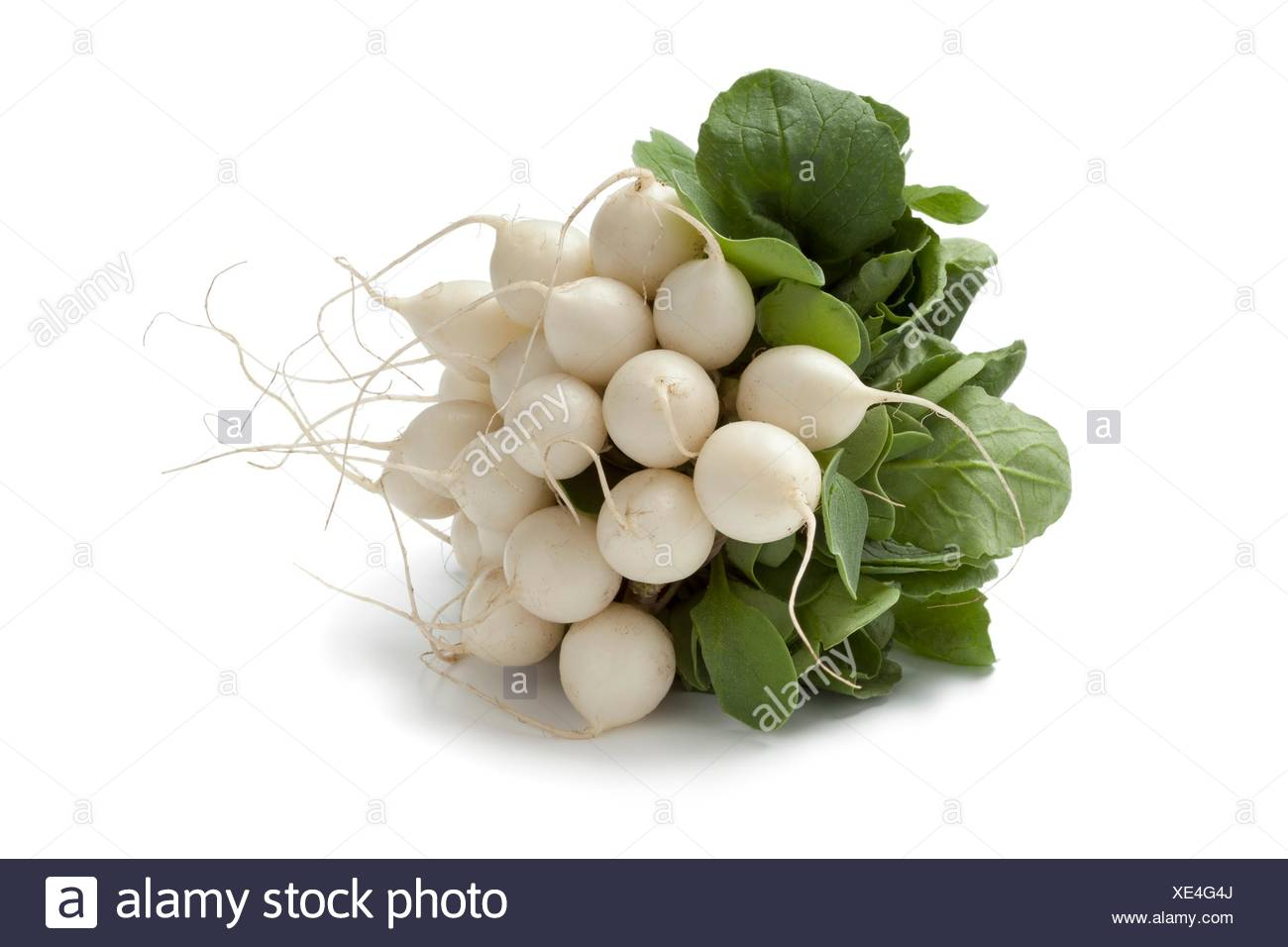Bunch of fresh white Radish on white backgrpound. - Stock Image