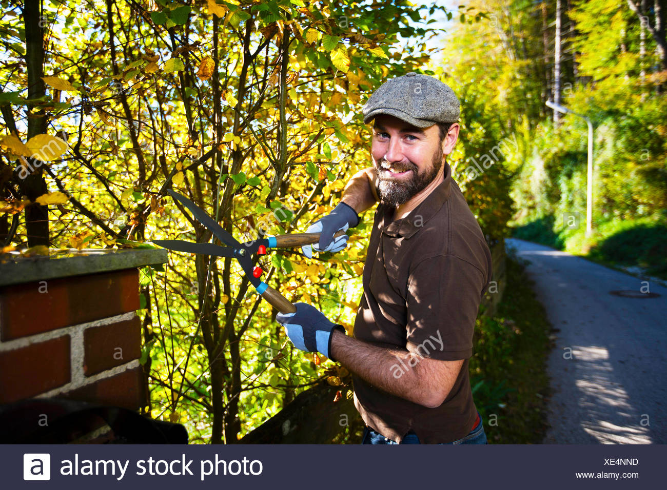 Man trimming plants by garden fence, Munich, Bavaria, Germany - Stock Image