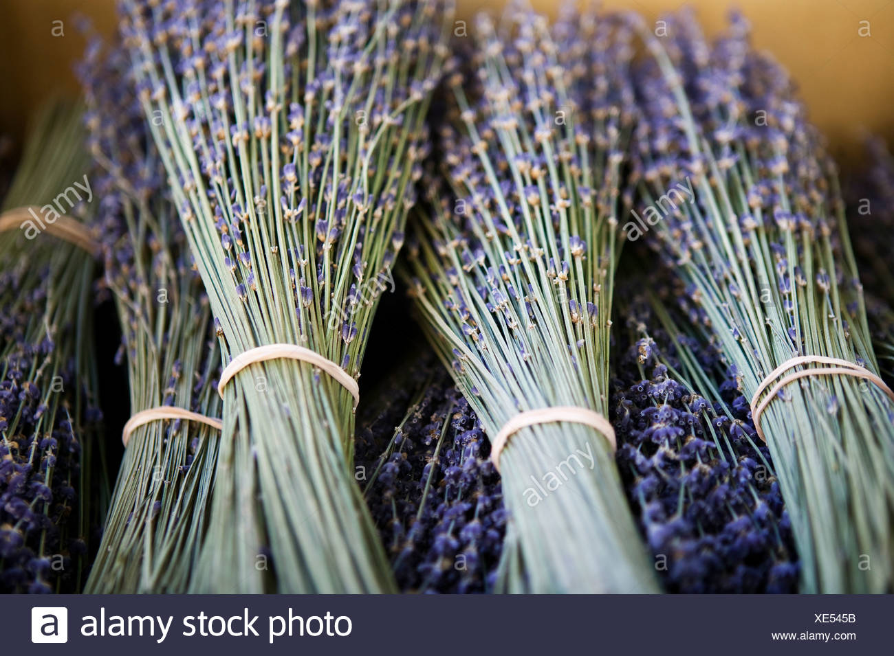 Bunches of lavenders, France - Stock Image
