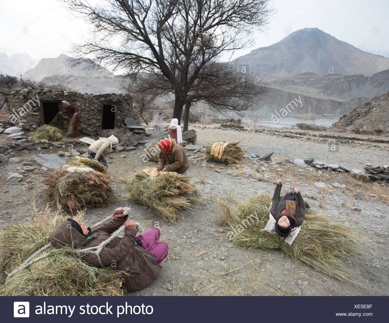 Women on their daily trek to get wood for cooking and heating and hay to feed their livestock, a two hour walk. Stock Photo