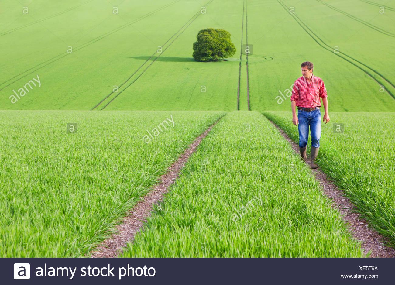 Farmer walking on path in field - Stock Image