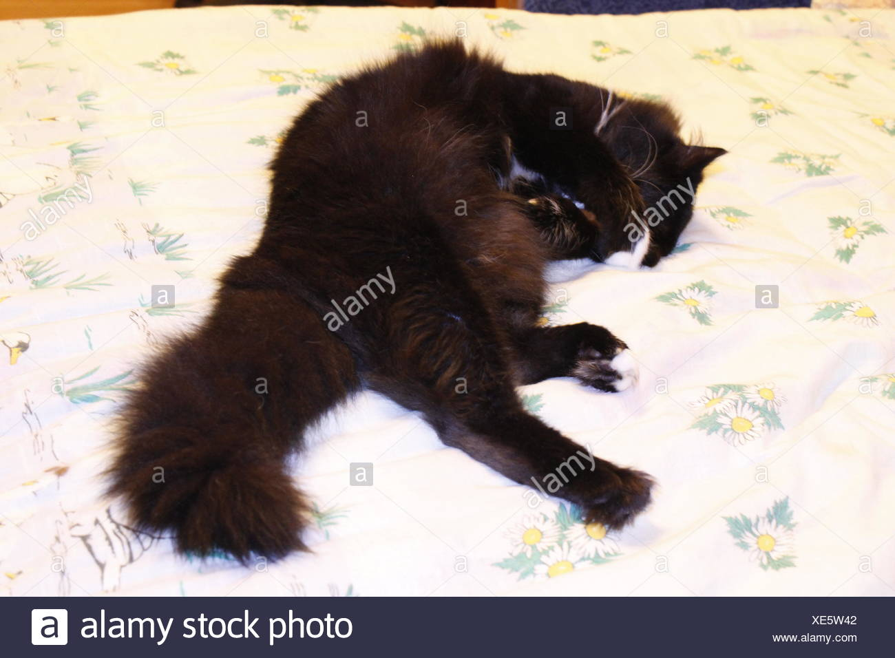 black cat lying prone on the white bed - Stock Image