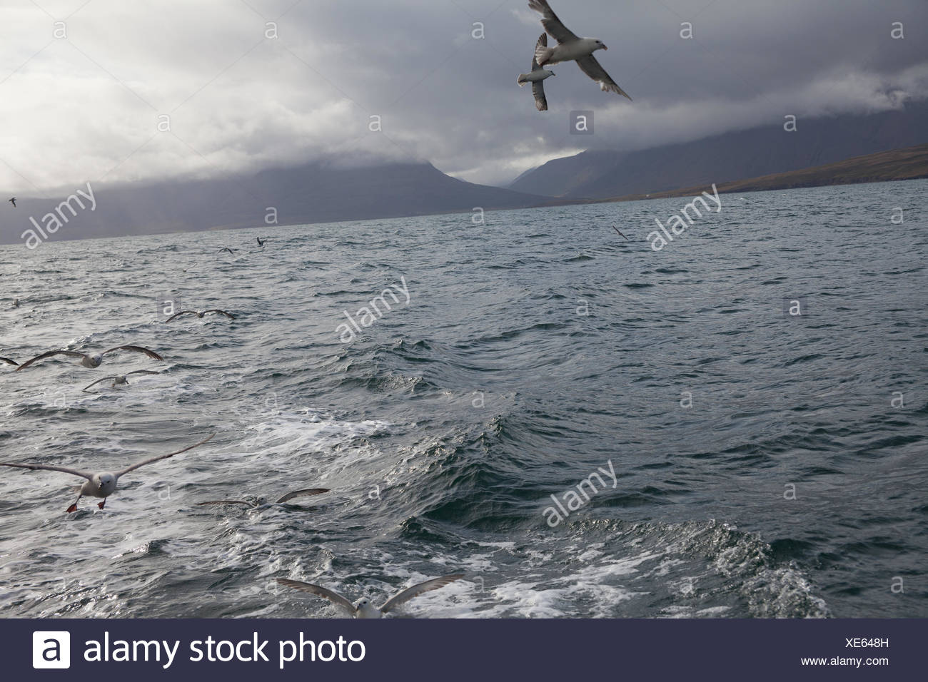 Seagulls Flying Over Sea Against Cloudy Sky Stock Photo