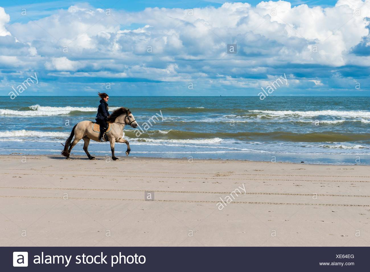 Hook of Holland, Netherlands. Young adult woman riding her horse alongside the beach southbound. - Stock Image
