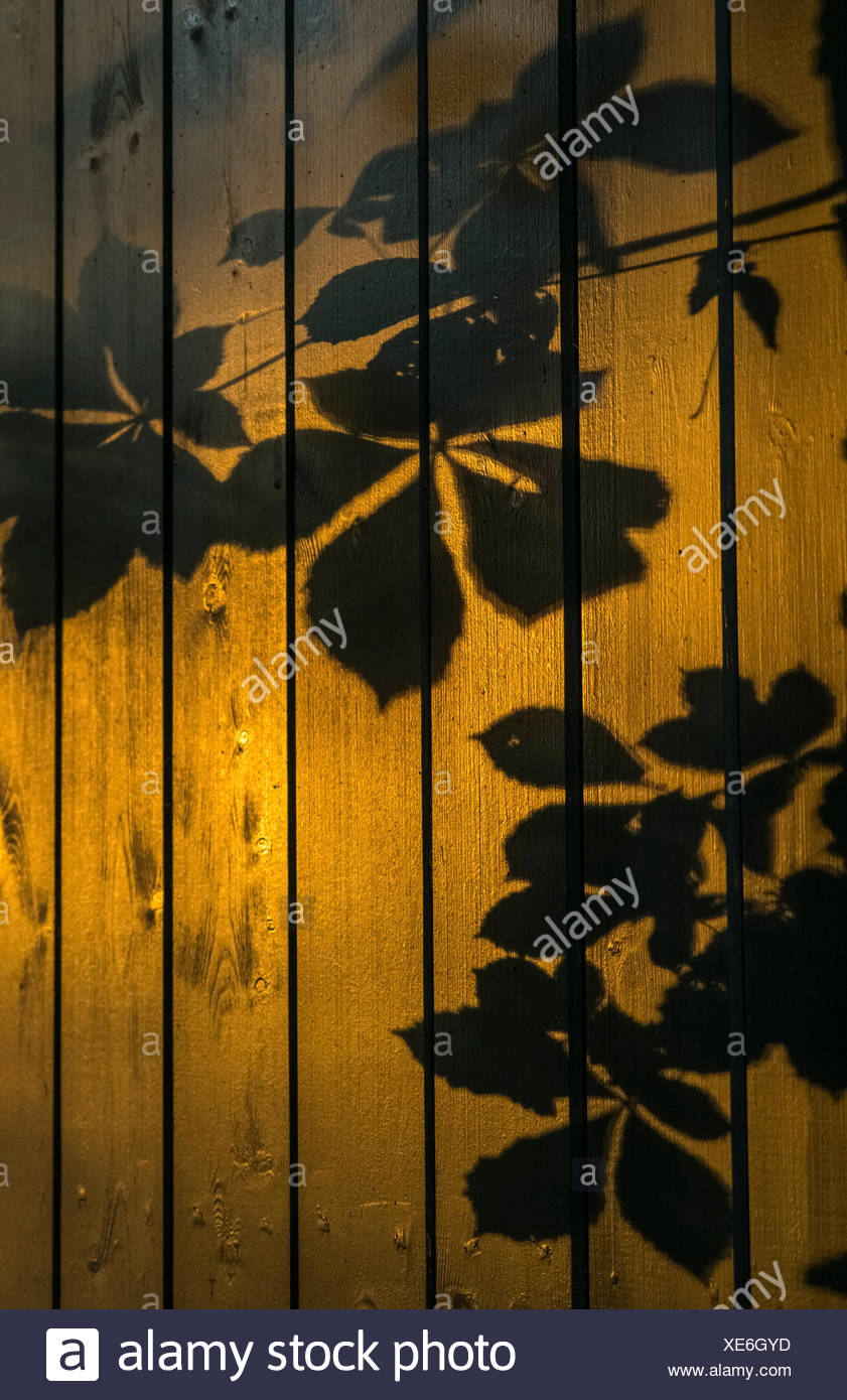 Shadows of tree branches and leaves cast on a wooden fence; Gateshead, Tyne and Wear, England - Stock Image