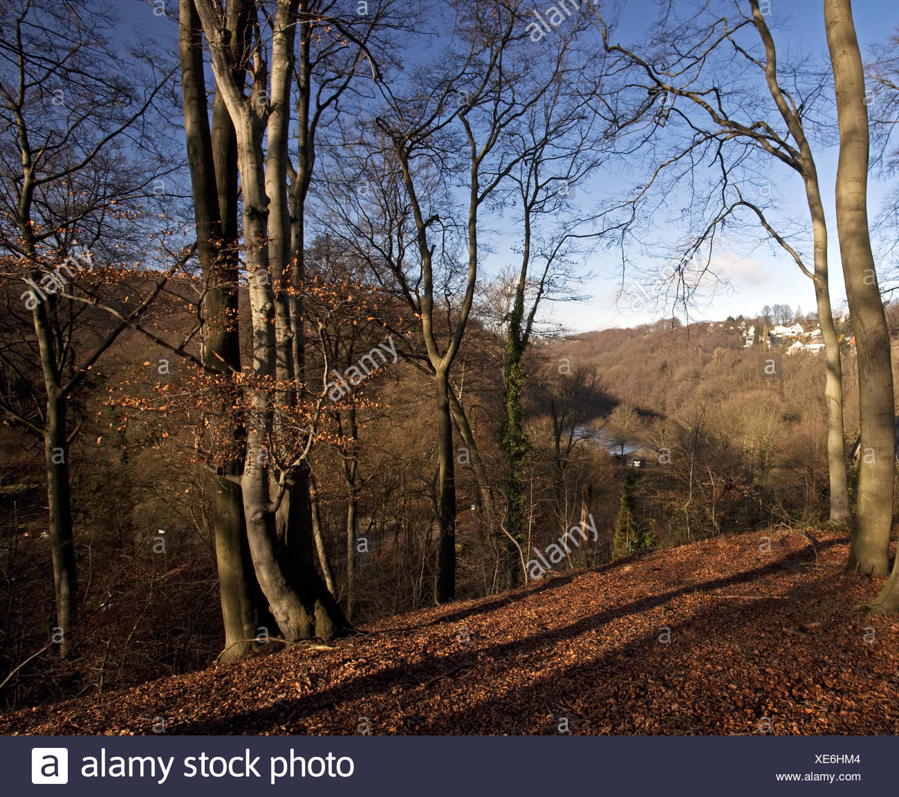 Wennemannsberg, Witten, Germany - Stock Image