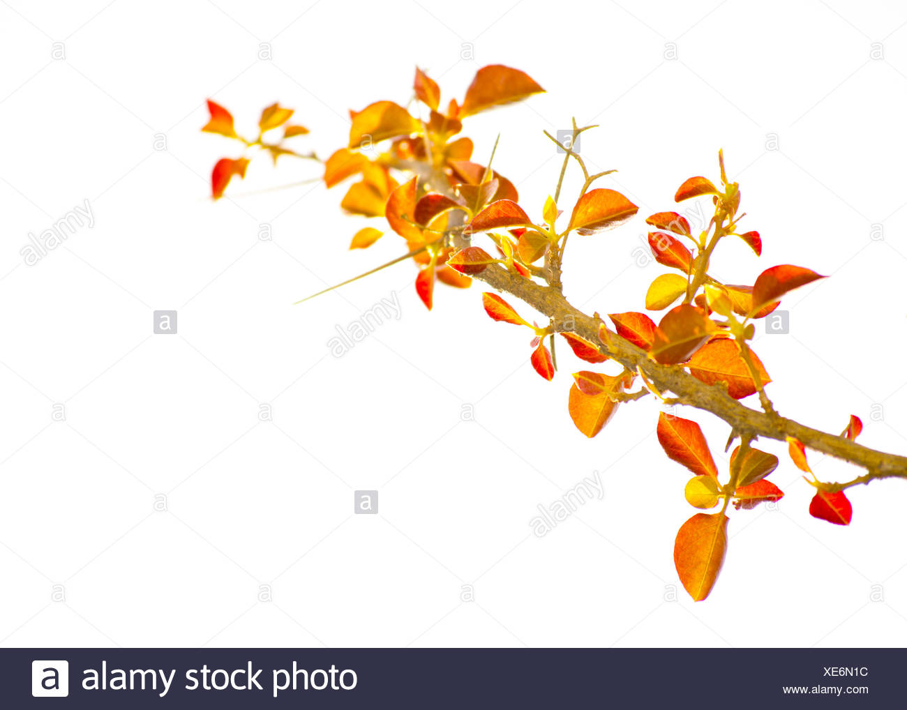Color Edited Fantasy Isolated Plant - Stock Image