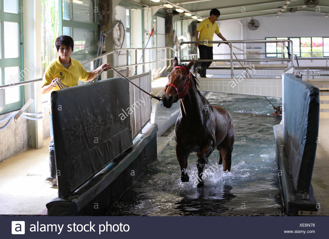 Hong Kong, China, after the horse is out of the water aquatic therapy pool - Stock Image