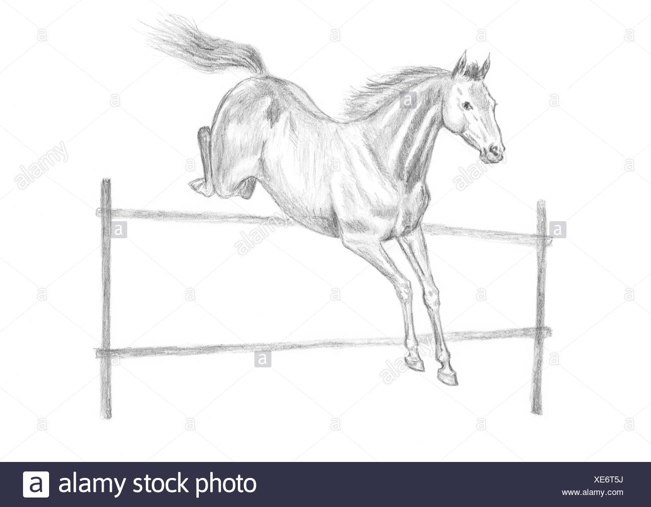 Jumping Horse Drawing Stock Photo Alamy