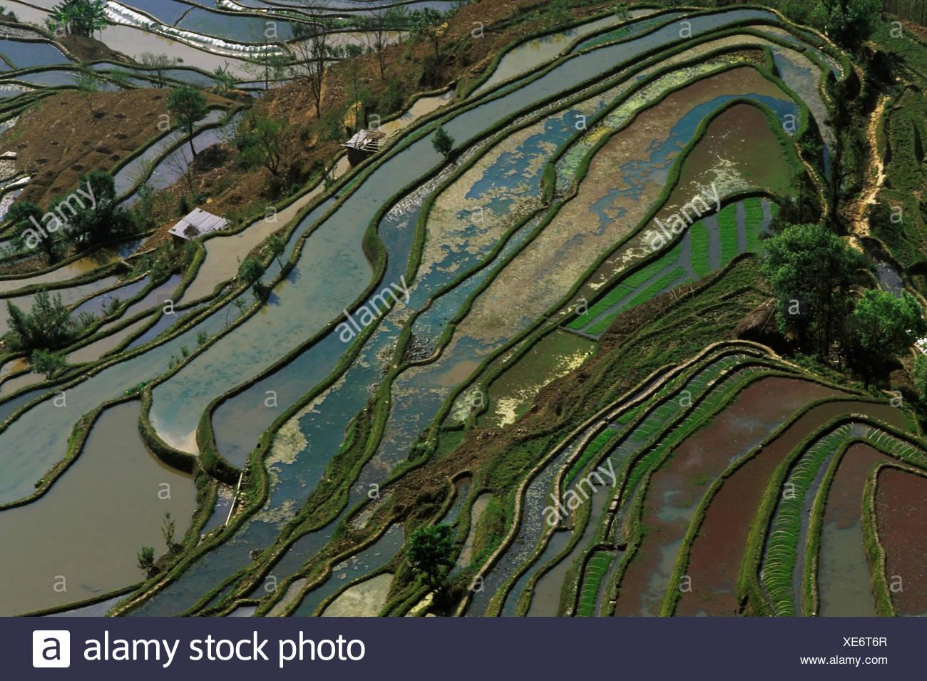 Rice terraces at Tiger's Mouth, Yuanyang, Yunnan, China, Asia - Stock Image
