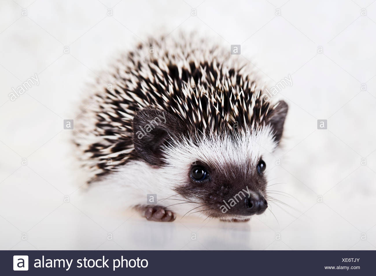 animal mammal creature - Stock Image