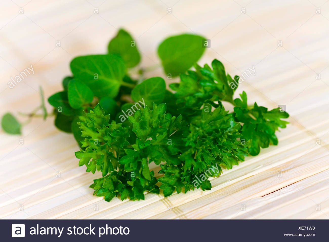 peppermint and parsley - Stock Image