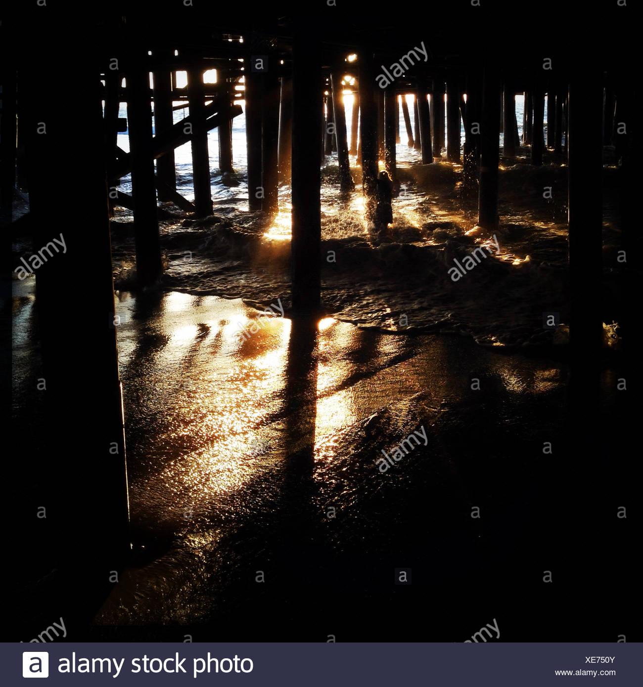 USA, California, Santa Monica, In Woods, Under Santa Monica Pier - Stock Image