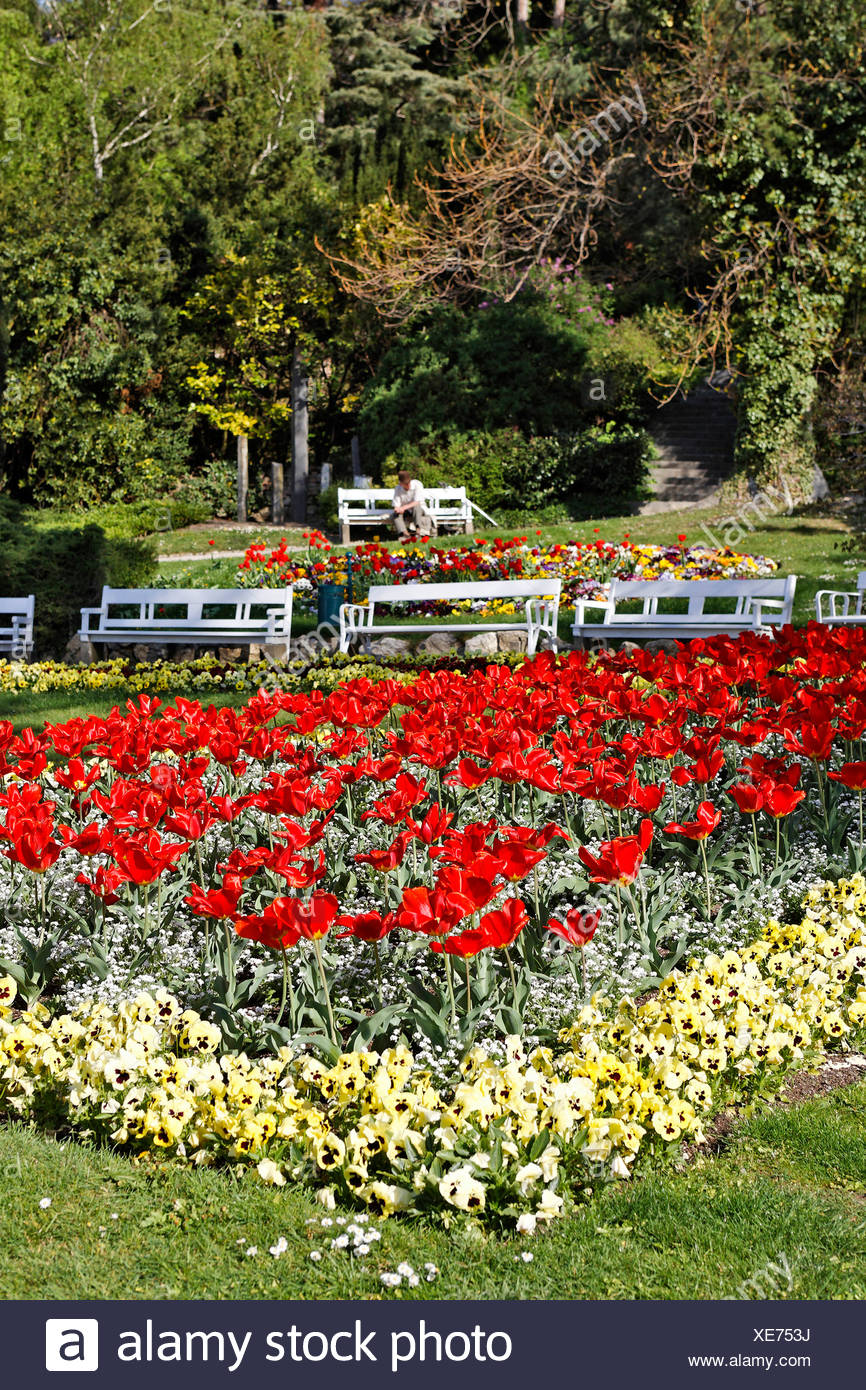 Tulip flowerbed in the spa park in Baden, Lower Austria, Austria, Europe Stock Photo