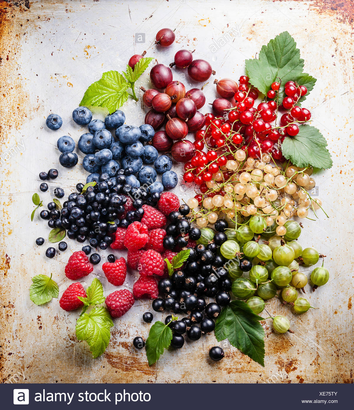 Mix of fresh berries with leaves on textured metal background - Stock Image