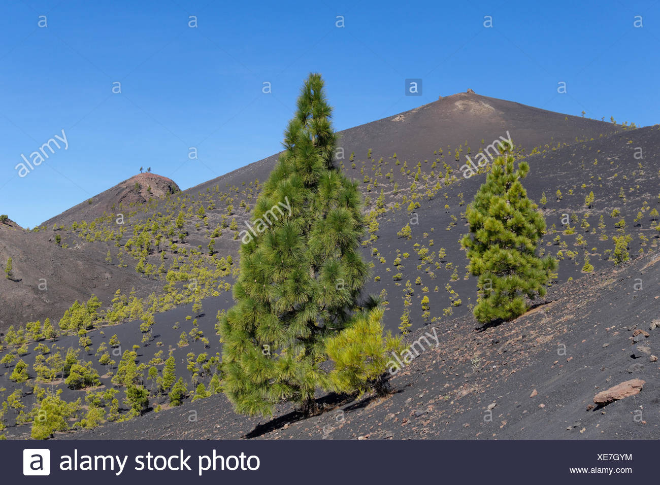 Volcano San Martín, Cumbre Vieja in Fuencaliente, La Palma, Canary Islands, Spain - Stock Image