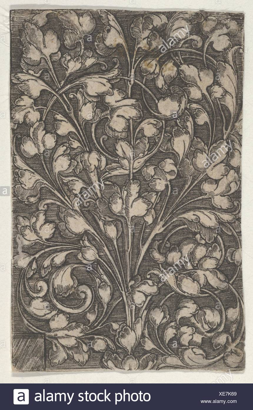 Vertical Panel with Scrolling Tendrils Rising from Center. Artist: Attributed to Heinrich Aldegrever (German, Paderborn ca. 1502-1555/1561 Soest); - Stock Image