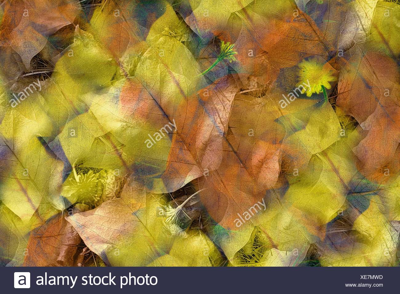 feuilles d´automne - Stock Image