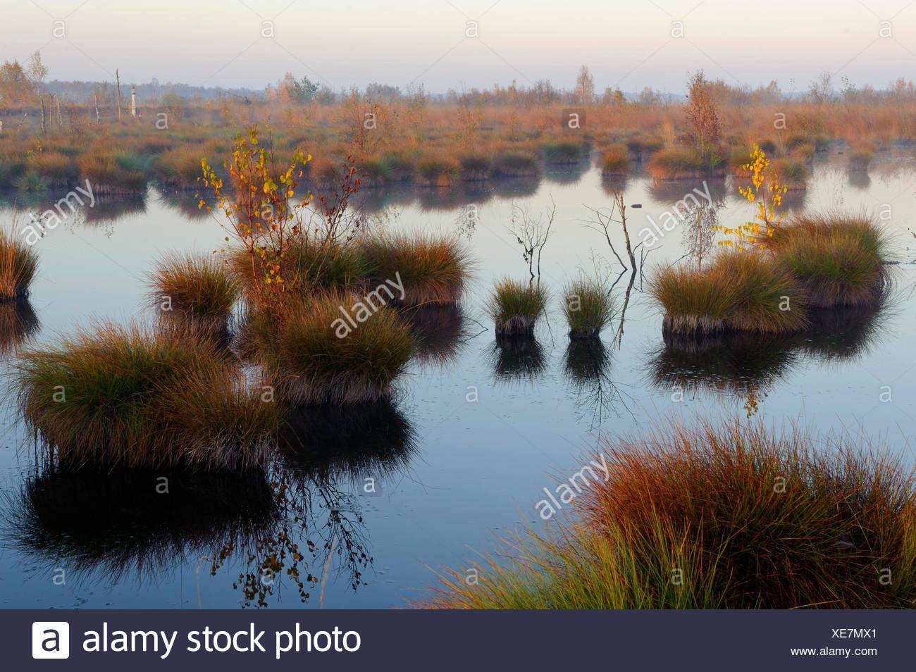moor landscape in morning light, Germany, Lower Saxony, Diepholzer Moorniederung, Goldenstedter Moor Stock Photo