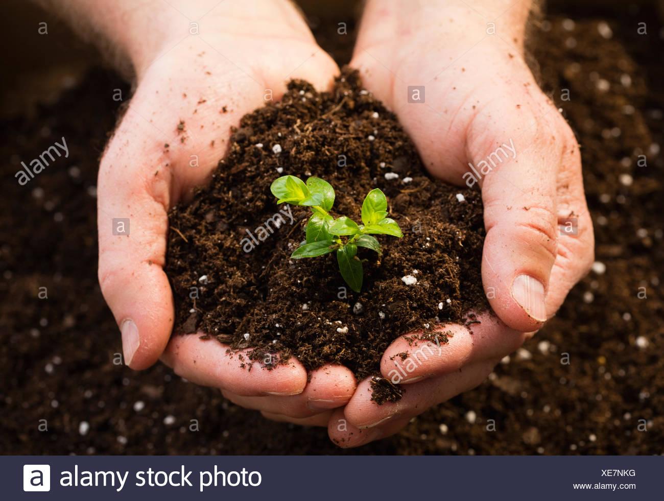 Man holding seedling Stock Photo