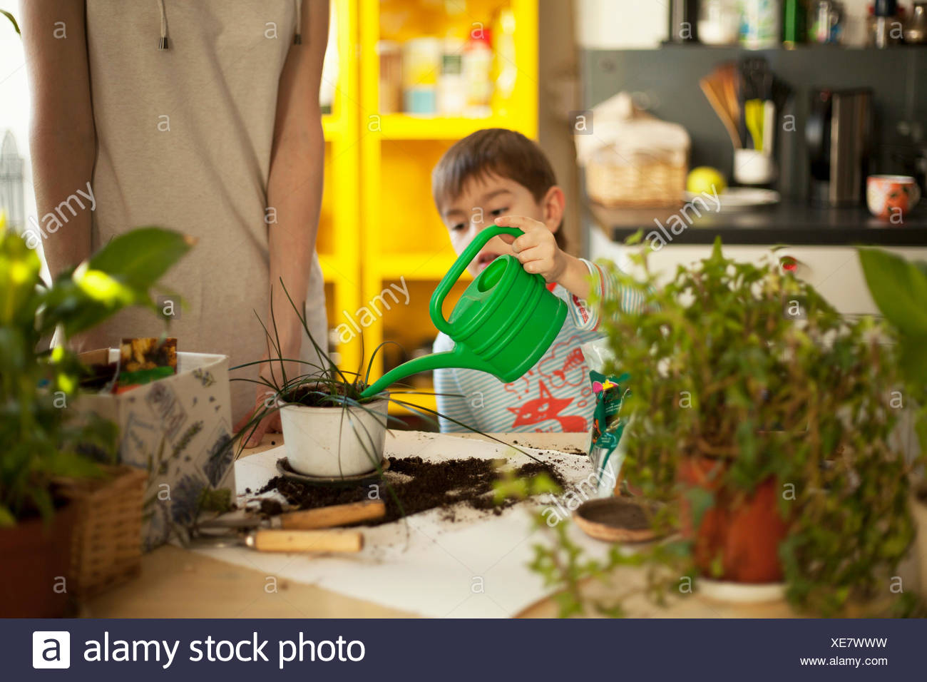 Boy watering pot plants at kitchen table - Stock Image