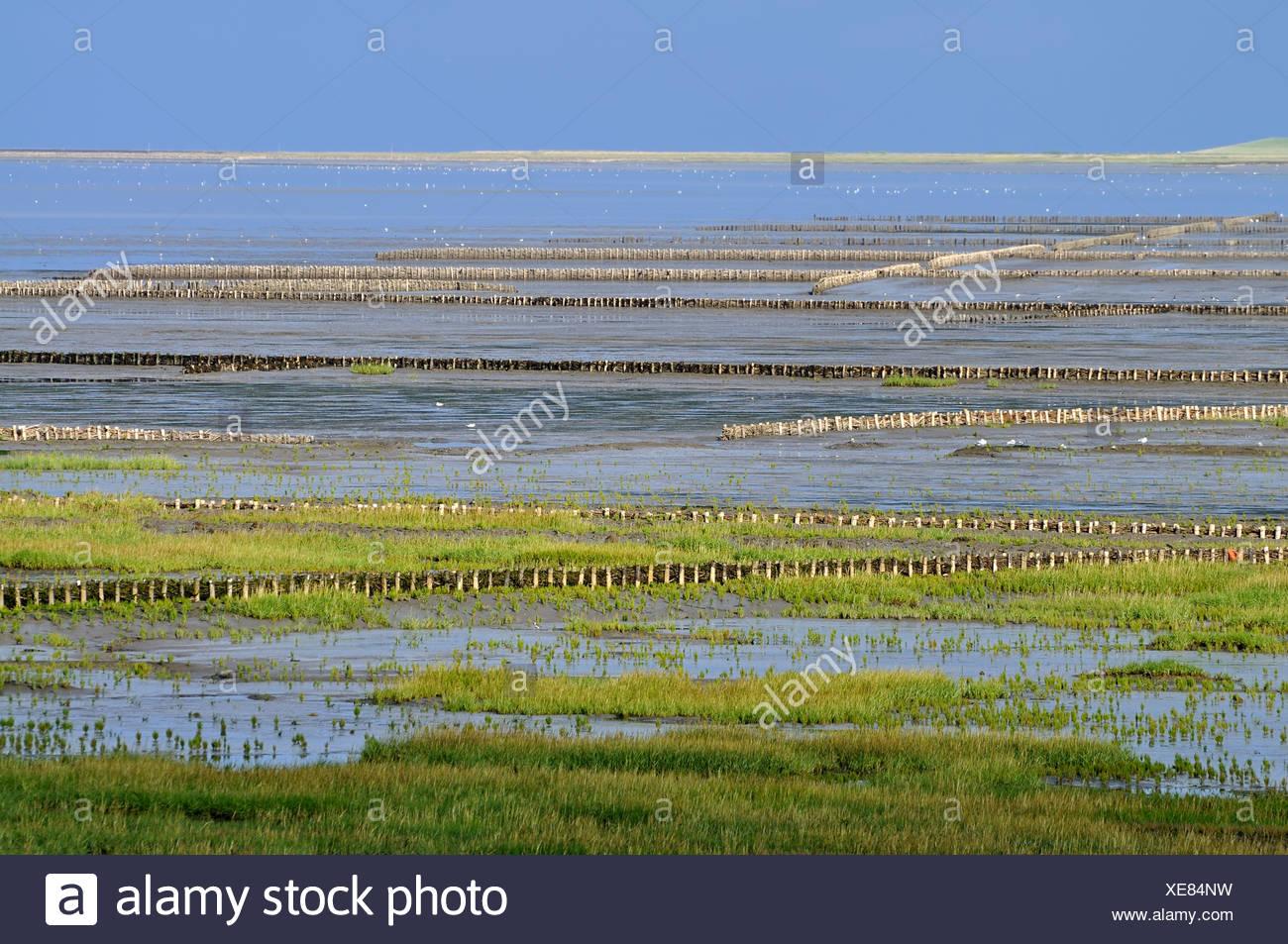 Breakwaters or groynes, coastal protection measures, Noderfriedrichskoog tidal flats, Nationalpark Schleswig-Holsteinisches - Stock Image