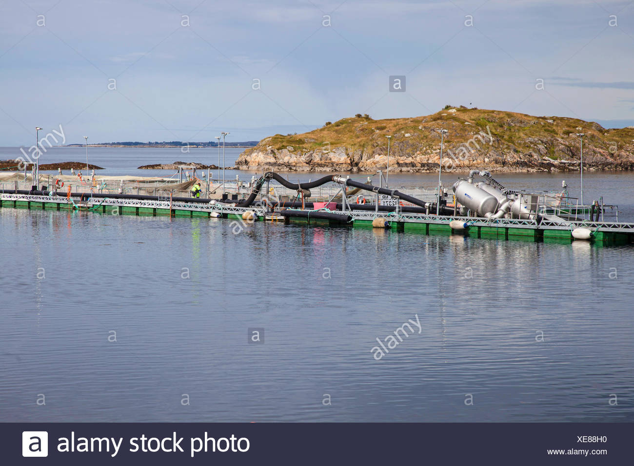 Atlantic salmon, ouananiche, lake Atlantic salmon, landlocked salmon, Sebago salmon (Salmo salar), salmonid farm, Norway, Hitra - Stock Image