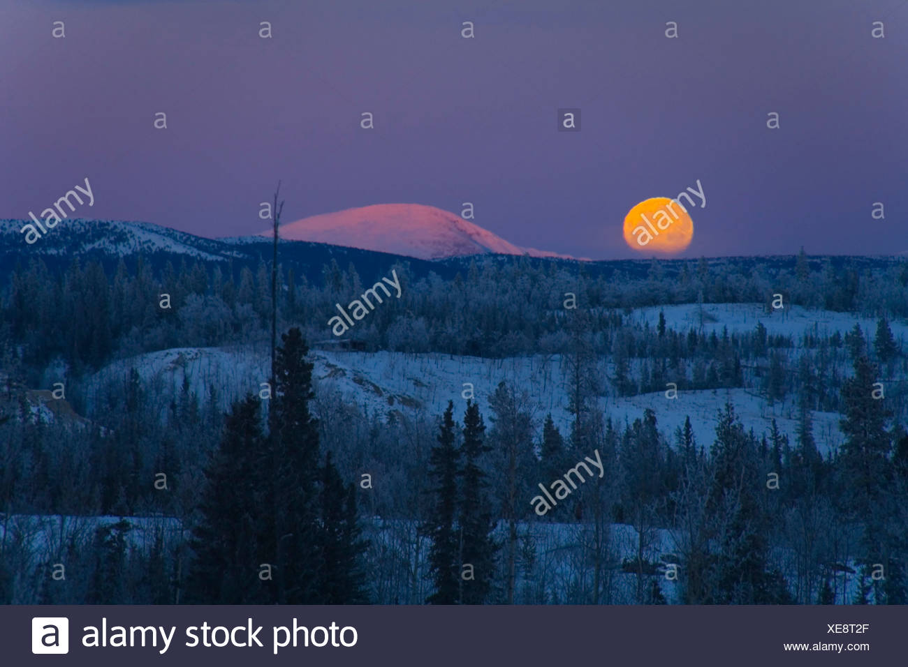 Moon rising over Takhini River valley, Ibex Mountains behind, Yukon Territory, Canada, North America - Stock Image