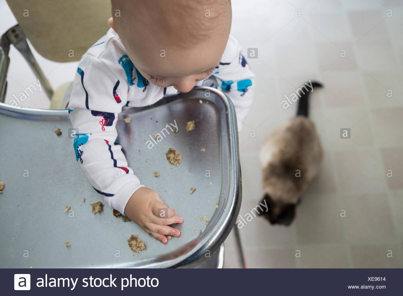 Baby boy high chair dropping food to cat - Stock Image