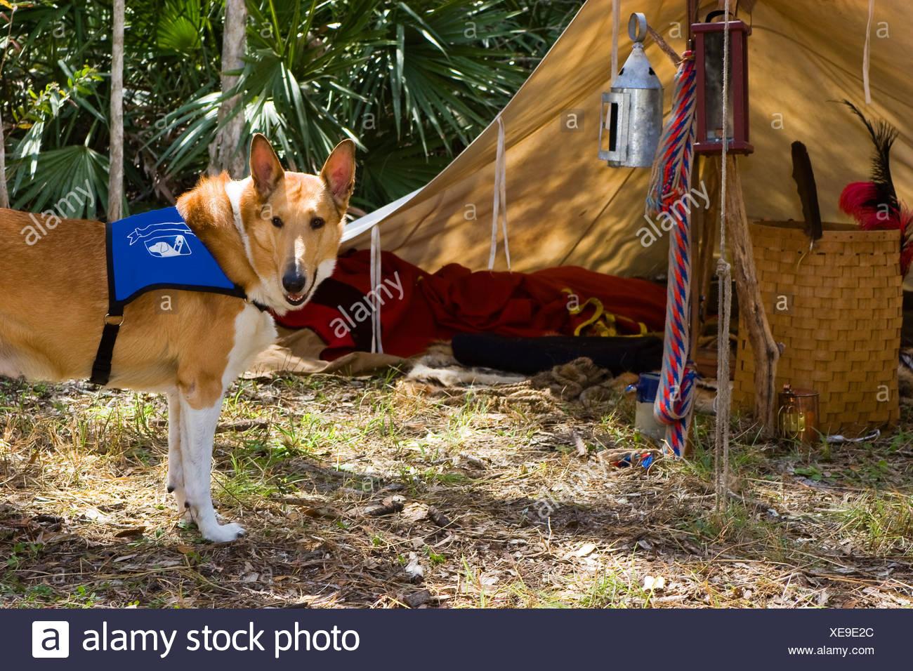 Dog Tent Stock Photos & Dog Tent Stock Images - Alamy