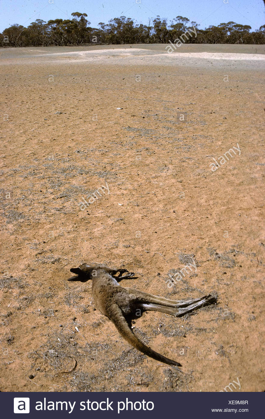 DROUGHT - Stock Image