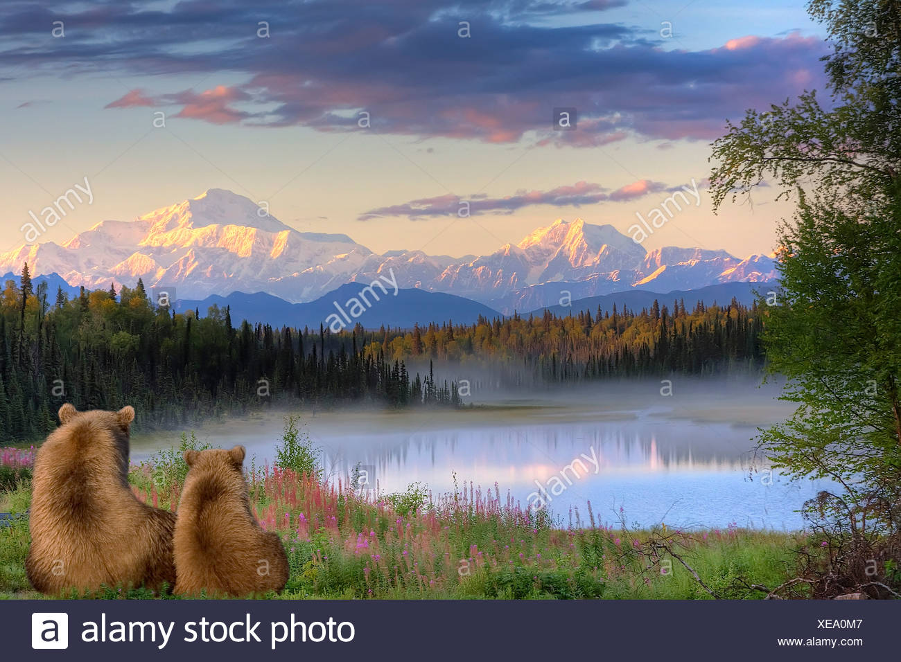 Sow and Cub brown bears looking across small lake and viewing Mt. McKinley at sunrise, SouthCentral Alaska, Autumn, COMPOSITE - Stock Image