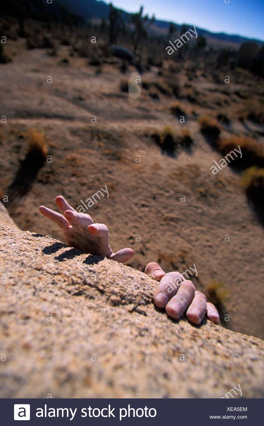 Scorpion du désert Division Sweat à capuche
