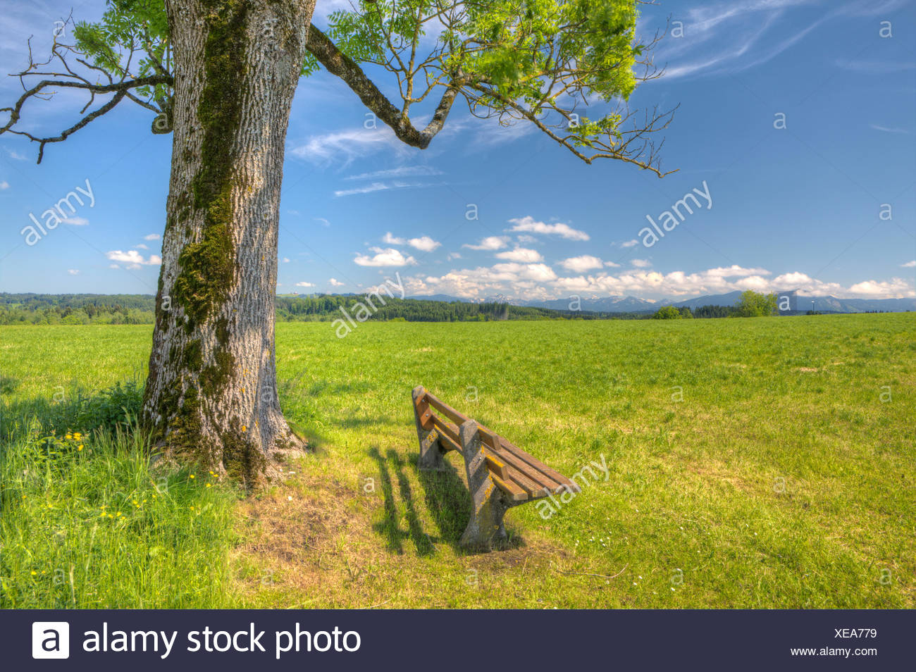 view over spring meadows near Oberhausen to Hohenpeissenberg mountain, Bavaria, Upper Bavaria, Germany - Stock Image