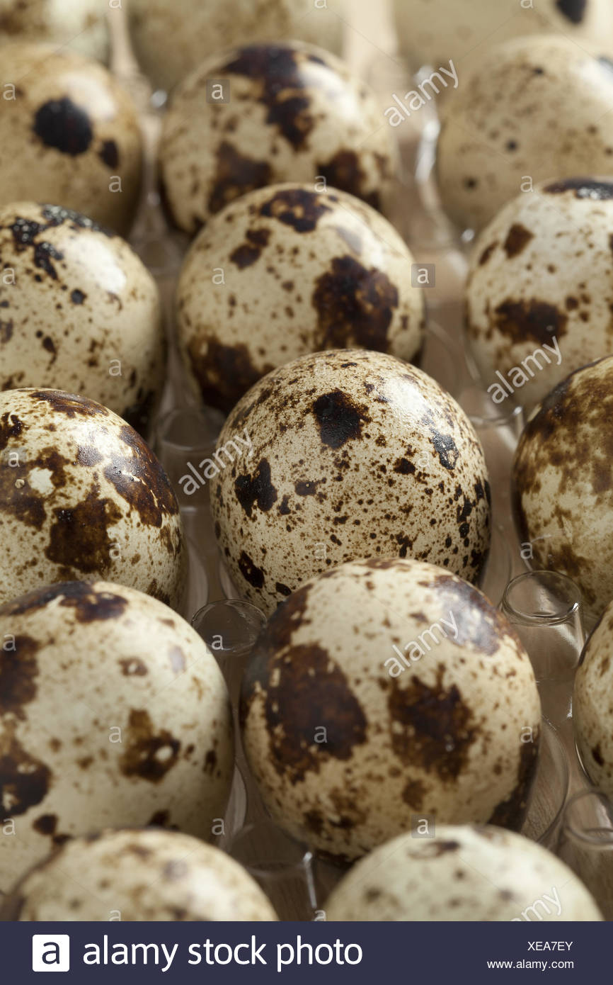 Quails eggs in a box. - Stock Image