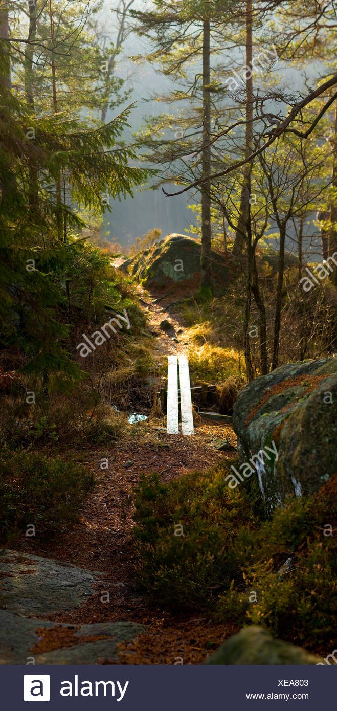 Footbridge along trees in the forest - Stock Image