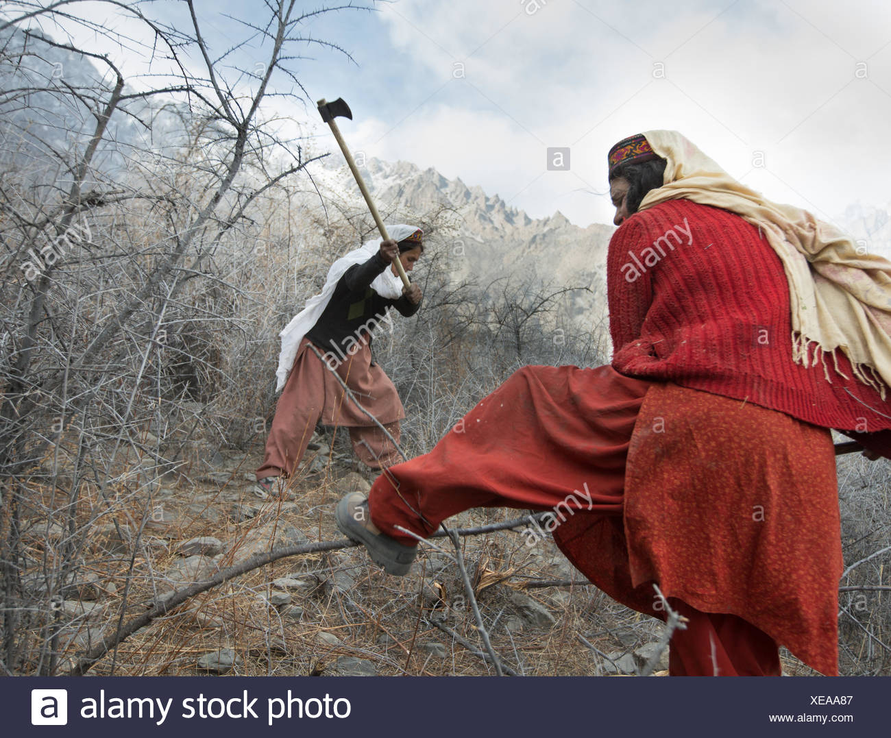 Women get wood for cooking and heating a two hour walk. Stock Photo