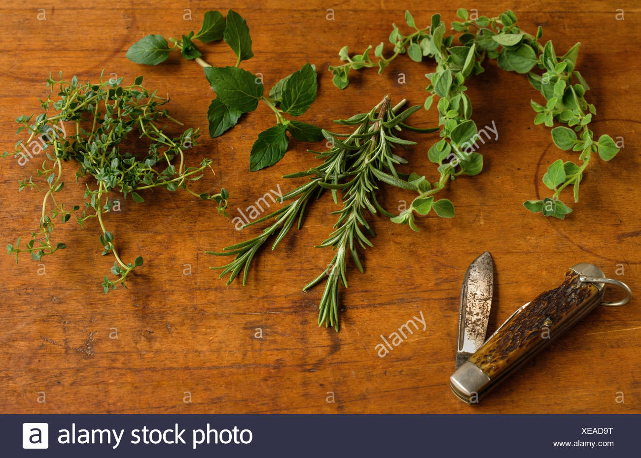 Mint, rosemary, oregano and thyme leaves next to old pocket knife on cutting board - Stock Image