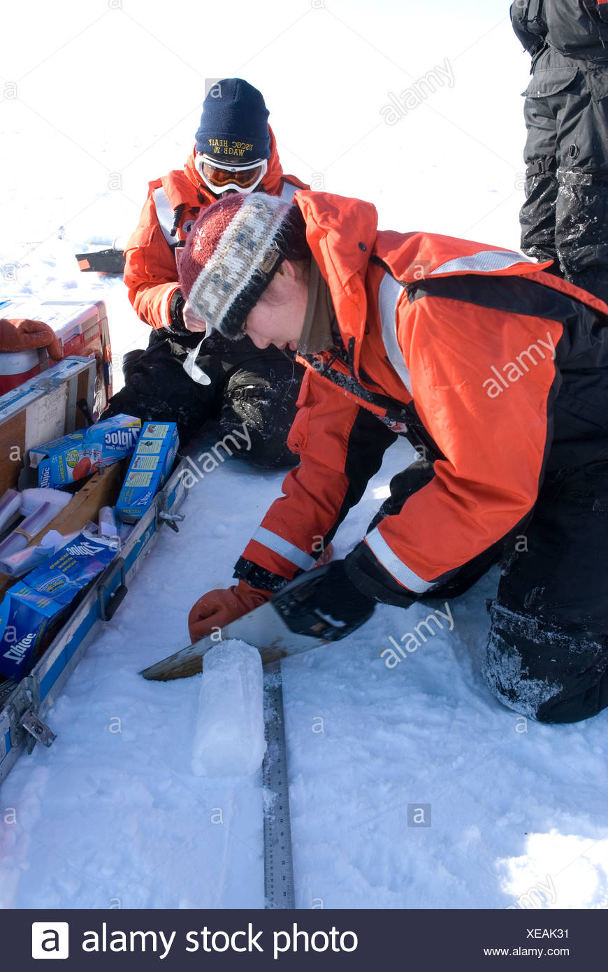 Alaska, Bering Sea. Scientists studying ice condiitons and the changing ecosystem due to global warming. A scientist cuts an - Stock Image