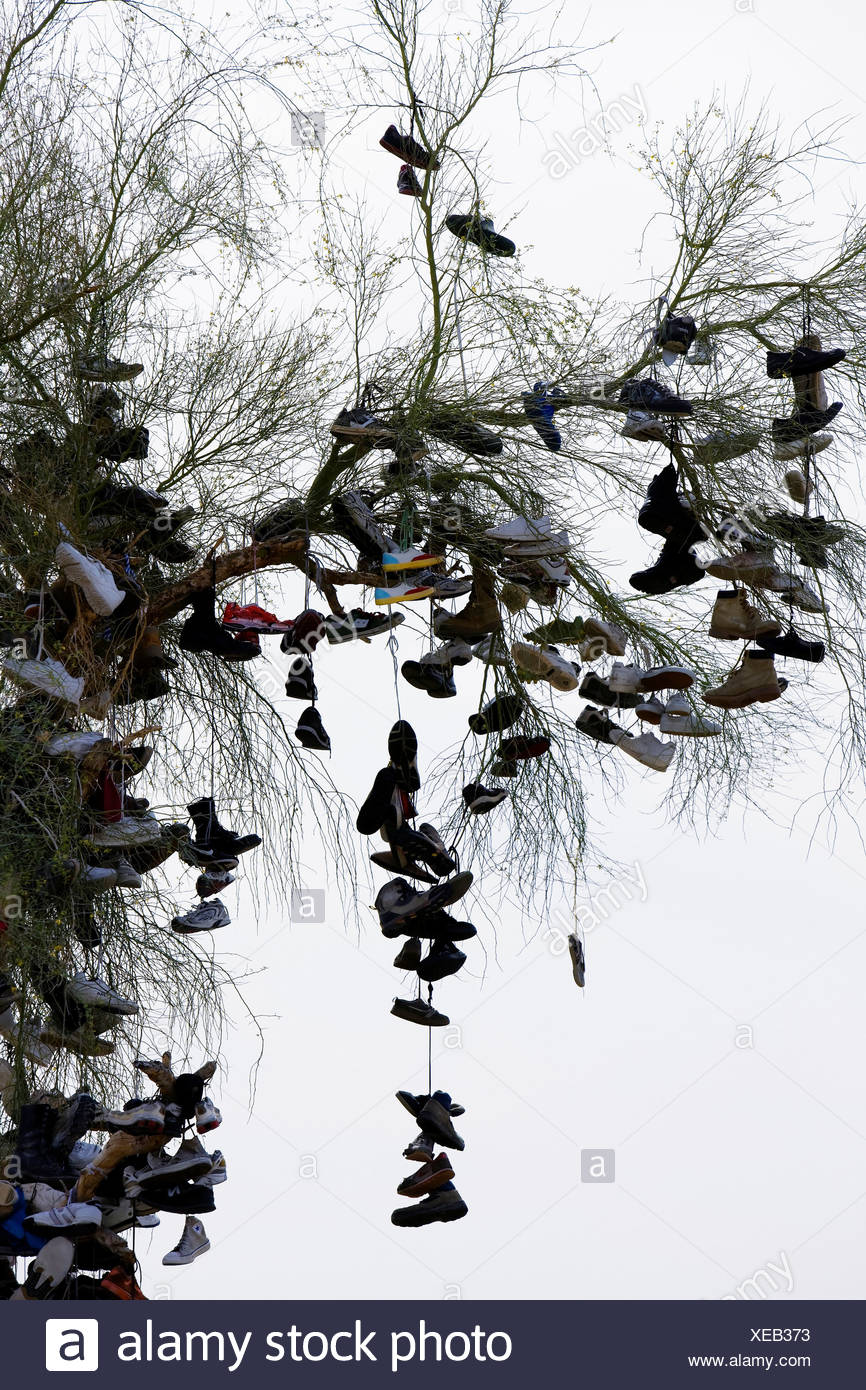 Abandoned Shoes Dangle From Tree - Stock Image