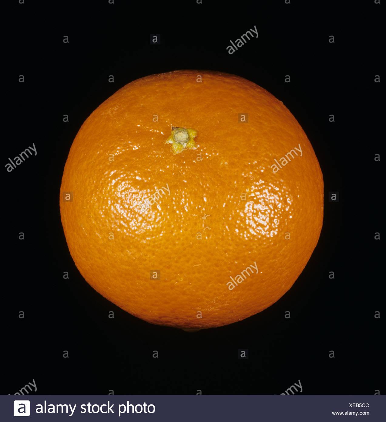 Whole mandarin fruit variety Sunburst - Stock Image