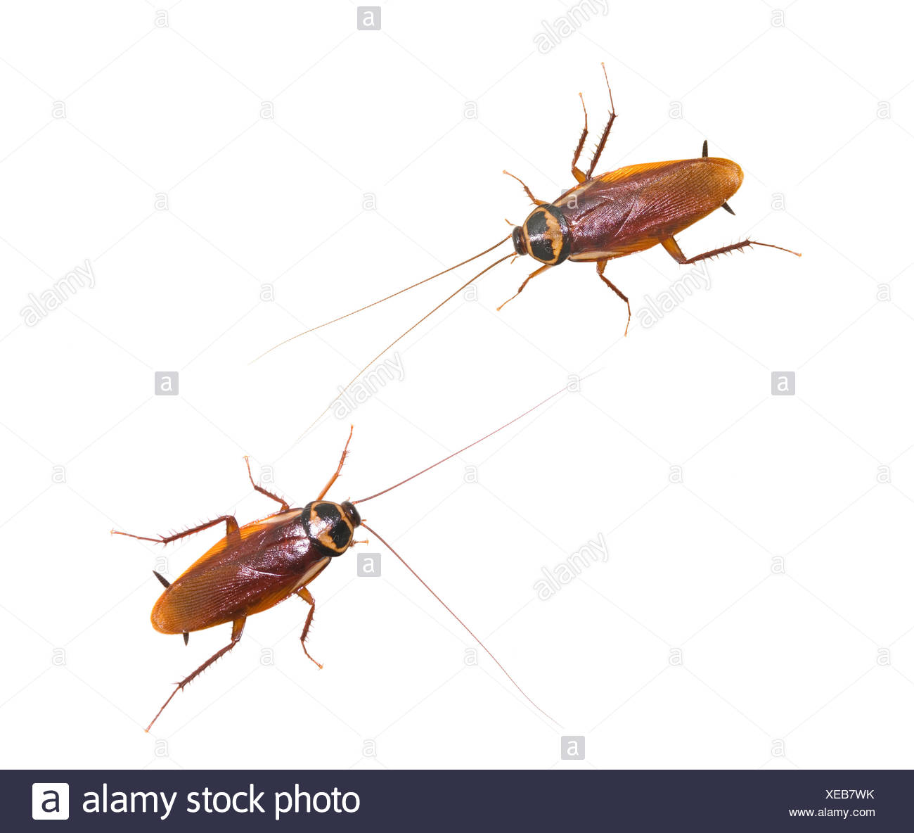 Cockroach Kitchen Stock Photos & Cockroach Kitchen Stock Images - Alamy